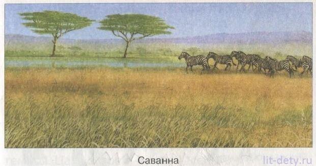 Растительный и животный мир саванн