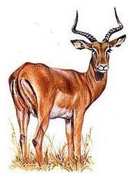загадка про антилопу