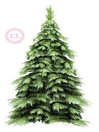 Загадки о растениях (елка)