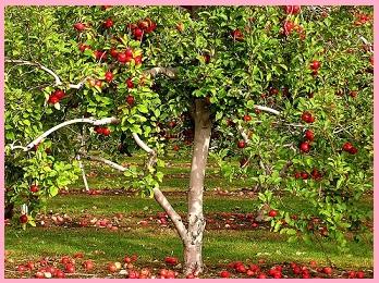 детские рассказы ушинского: история одной яблоньки
