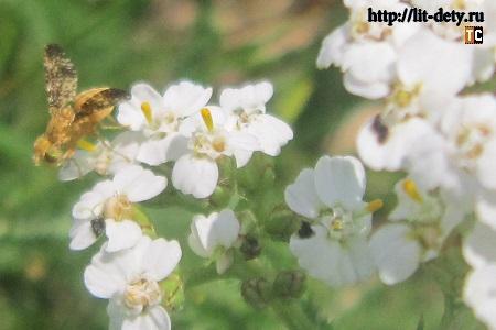 насекомые. Наблюдения, фотографии