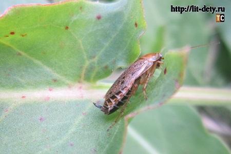 Фотографии насекомых: жук