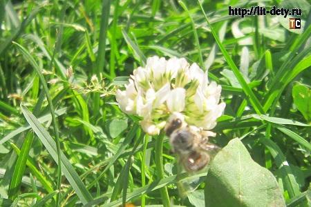 наблюдения, фотографии насекомых