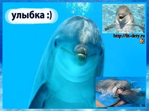 дельфин животное, дельфины млекопитающие, реферат дельфины, интересно о дельфинах