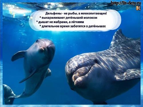 дельфин животное, дельфины млекопитающие, реферат дельфины, интересно о дельфинах,